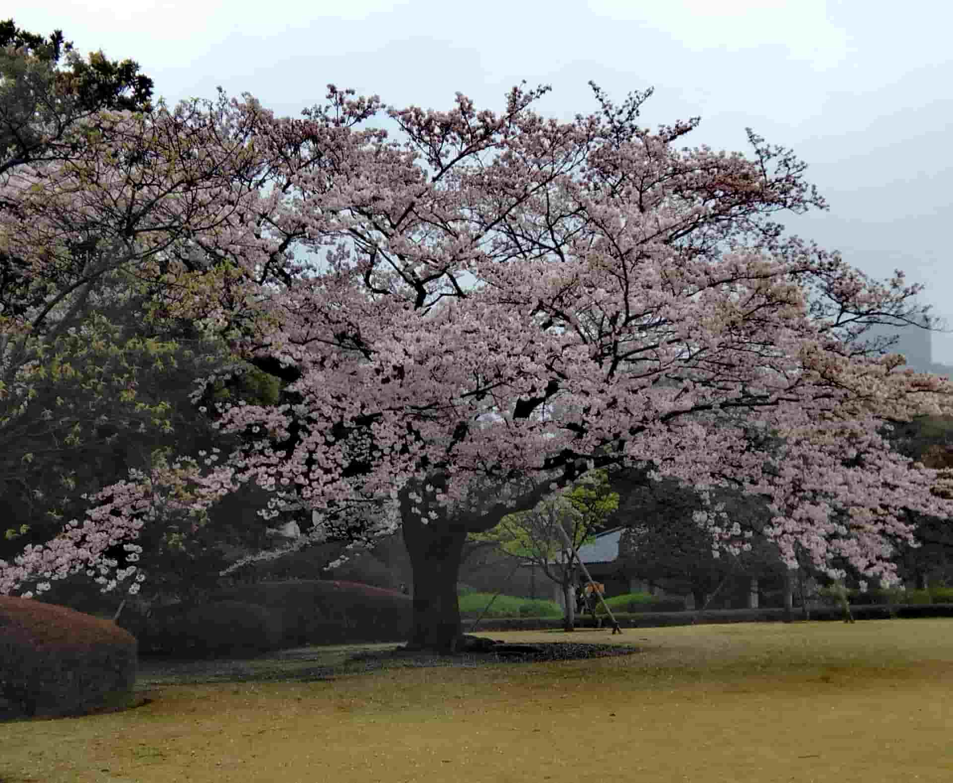 Giardino dell'imperatore di Tokyo