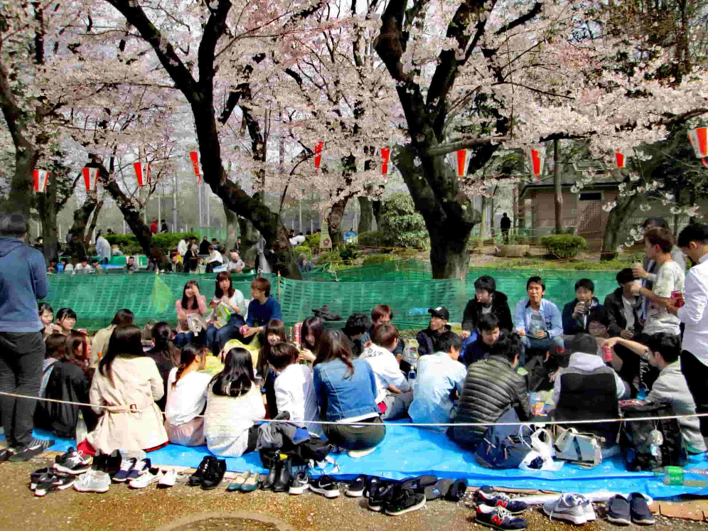 Hanami nel parco di Ueno a Tokyo