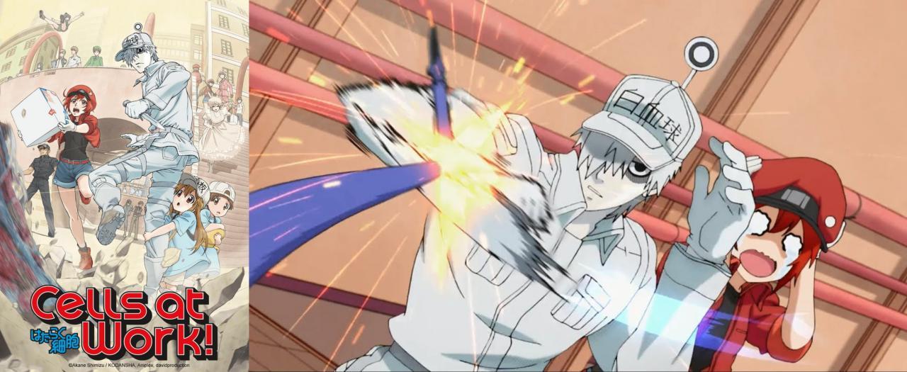 edutainment anime: Hataraku Saibou