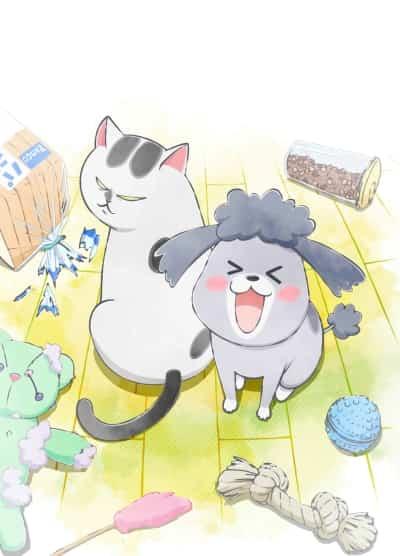 Inu to Neko Docchi mo Katteru to Mainichi Tanoshi
